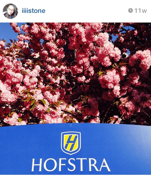 Hofstra